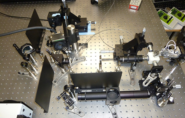 Light sheet microscope image